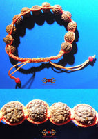 Orange blessed bracelet of Shiva composed of 12 sacred Rudraksha seeds.