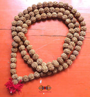 Large Hindu rosary composed of 108 sacred seeds of Shiva Rudraksha.