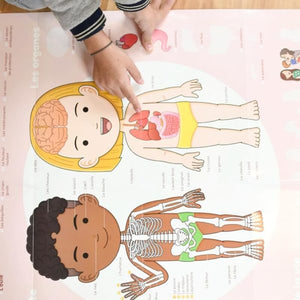 Human Body Discovery Educational  Poster + 49 Stickers (3-7 Years Old)