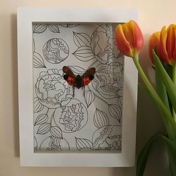 Red Lanternfly Framed Entomology - curiosity, taxidermy, unique gifts, framed art, home decor
