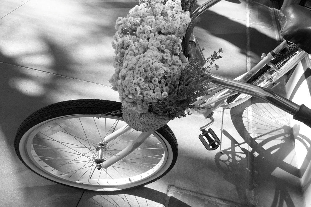 Bicycle Blooms