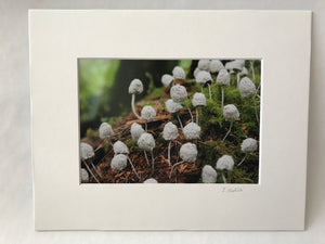 Factory Obscura Artist Leigh Martin: 5x7 Art Print of Knitted Installations
