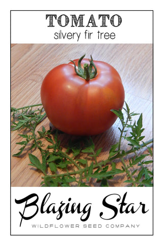 Silvery Fir Tree Heirloom Tomato