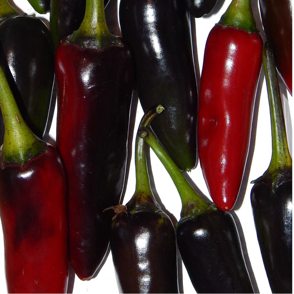 PEPPER Black Hungarian