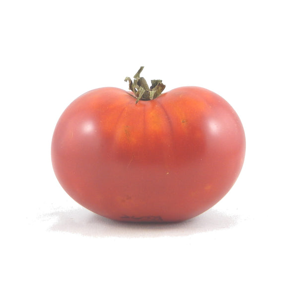 TOMATO dwarf artic rose