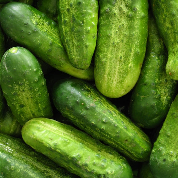 CUCUMBER national pickling