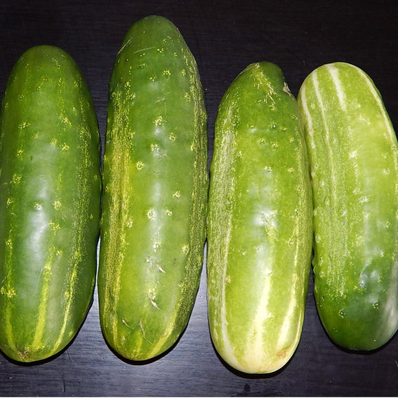 CUCUMBER straight eights