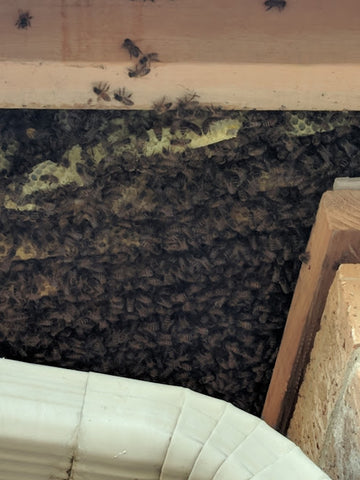 Bees and bee hive removal – G Farms