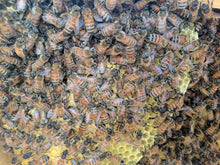 Hive inspection, assistance, and or consultation