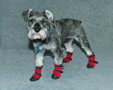 Loft Paw Boots-Set of Four