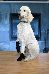 Paw-fect Indoor Dog Boots-One Pair