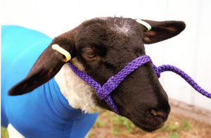 "5/8"" Braided Sheep Halter Lamb/Ewe Size"