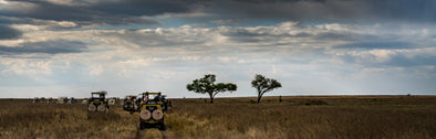 Rush Hour at The Serengeti