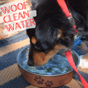 YOU LOVE CLEAN WATER ON YOUR RV TRIPS. YOUR PETS DO TOO.