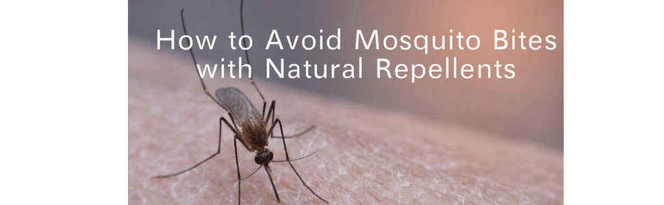 How to Avoid Mosquito Bites with Natural Repellents