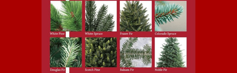 How to Choose the Perfect Real Christmas Tree and Keep Alive