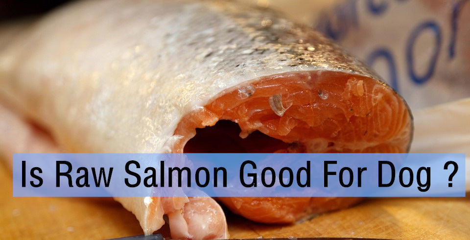Is Raw Salmon Dangerous For Dogs ?