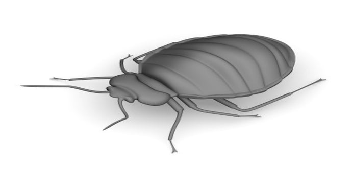 How To Get Rid of Bed Bugs 8 Step Guide