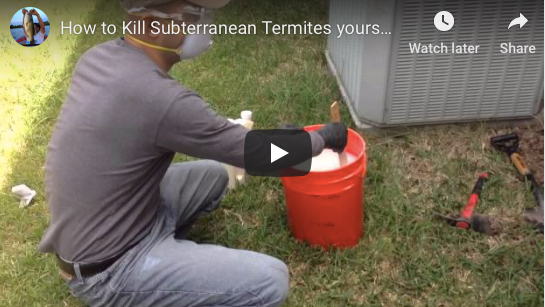 How NOT To Treat For Termites: Video Guide