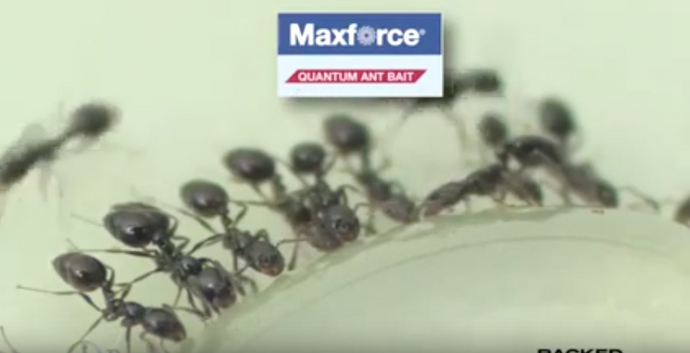 Maxforce Quantum Ant Bait Video Guide