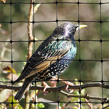 Load image into Gallery viewer, Bird-X Bird Netting for Gardens and Lightweight Applications (100 ft. x 14 ft)