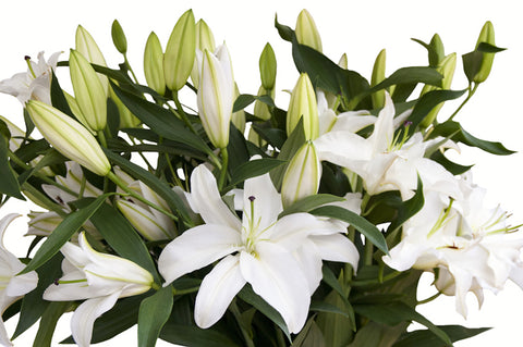 Casablanca Lilies photo