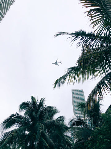 Miami Airplane Photo with Palm Trees