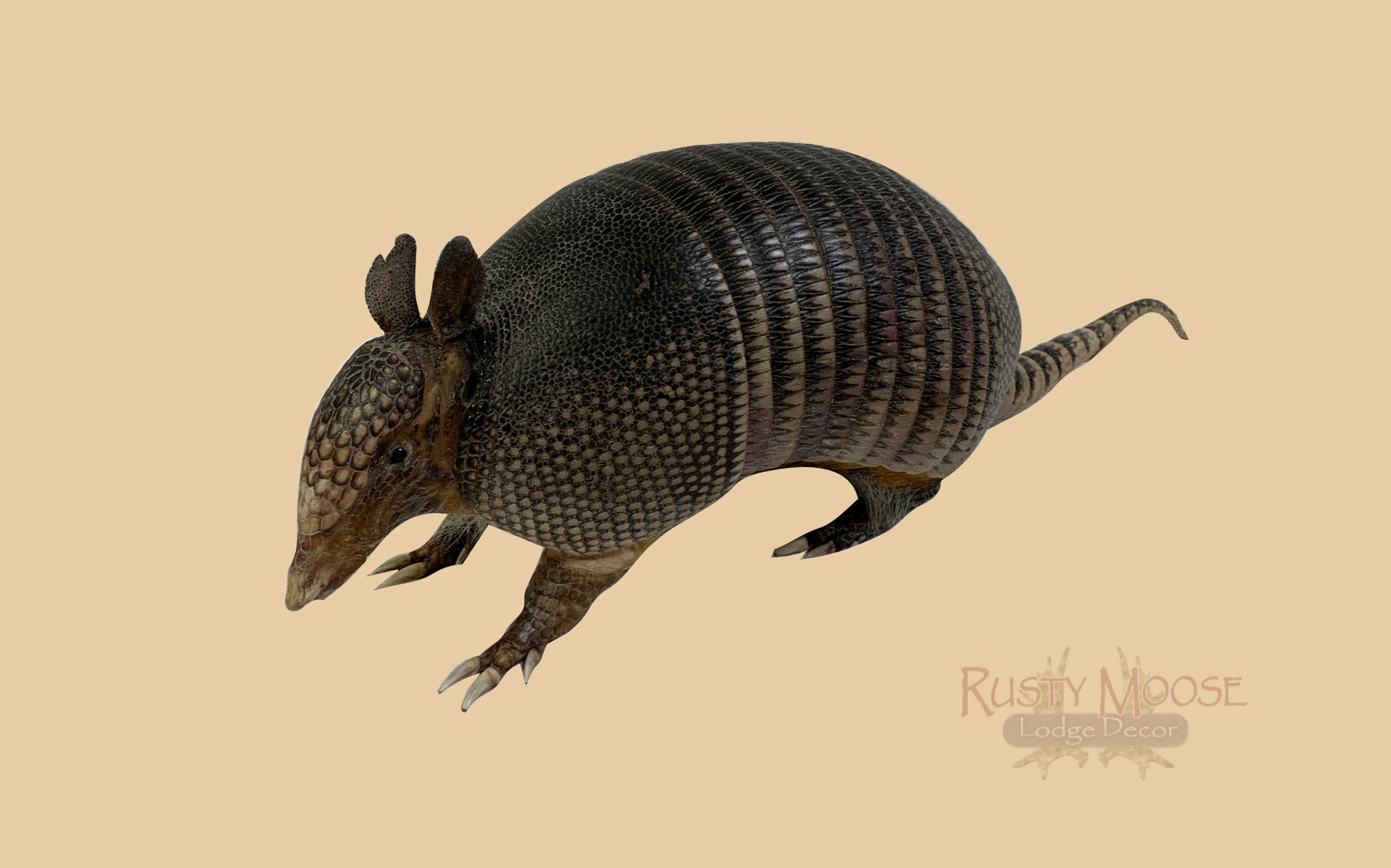 Armadillo - Rusty Moose Marketplace