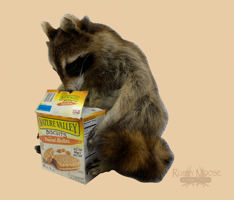 Snackin' Raccoon - Rusty Moose Marketplace