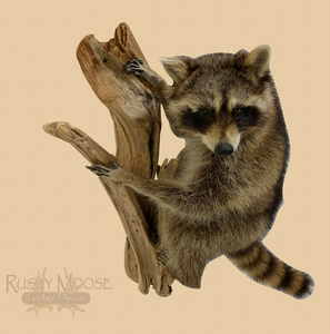 Hanging Raccoon - Rusty Moose Marketplace