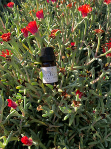 The Vigilante | Anti-Viral Essential Oil Blend