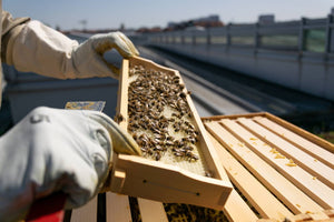 Where To Locate A Beehive