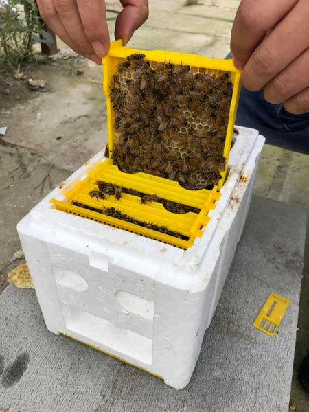 Queen rearing Hive mini mating nuc beehive nucleus