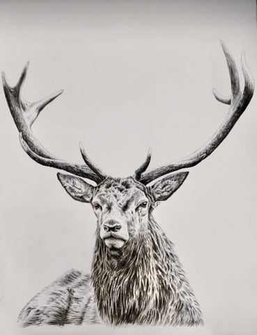 RM Stag Print
