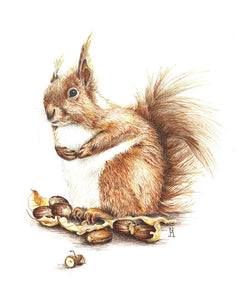 Print - Squirrel