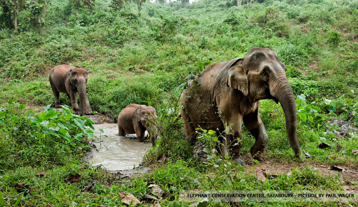 Mother elephant and her calf crossing pond at the Elephant Conservation Center