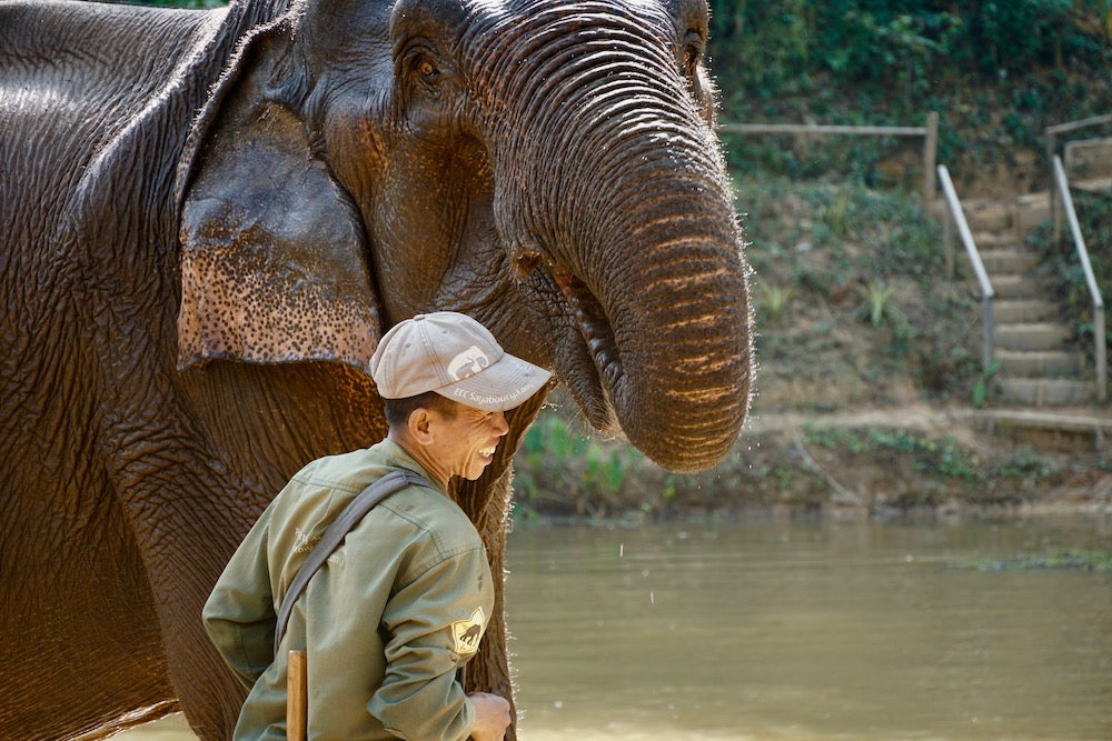mahout smiling with elephant at elephant conservation center
