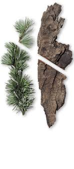 cedarwood bark and pine