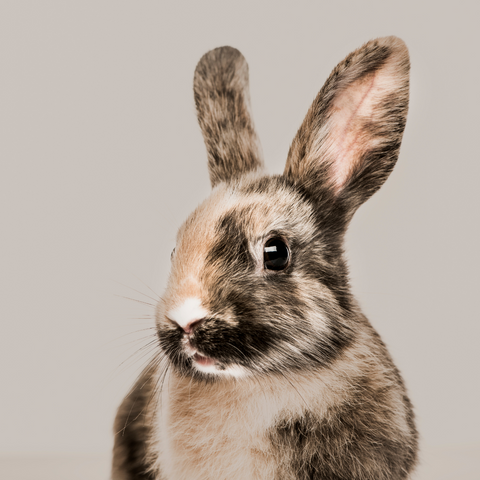 brown and white rabbit on taupe background