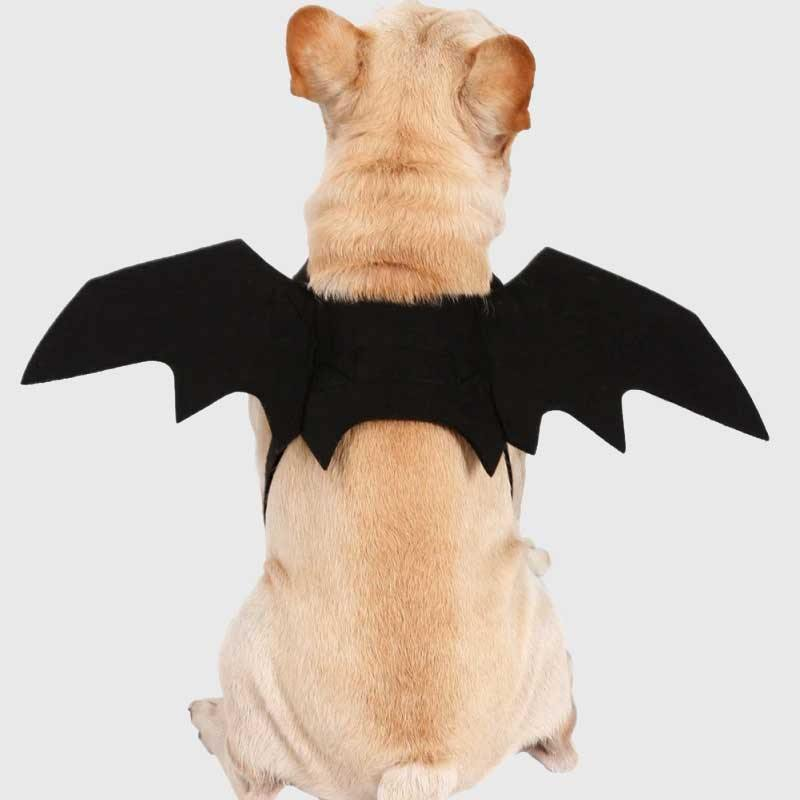 Pet Vampire Bat Wings - Wyvern's Hoard
