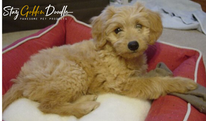 StayGoldenDoodle Gift Cards
