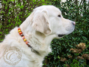Dog collar Brown Orange Yellow | handmade dog collars | honden halsband | collarcrafts | collars & leashes