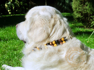 "Dog collar ""Double Midi Yellow"" 