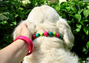handmade dog collars | honden halsband | collarcrafts | collars & leashes