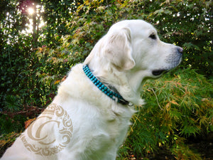 dog collar - collarcrafts - honden halsband - martingale