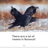 All about Ravens