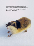 How Animals Survive in the Cold