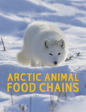 Arctic Animal Food Chains
