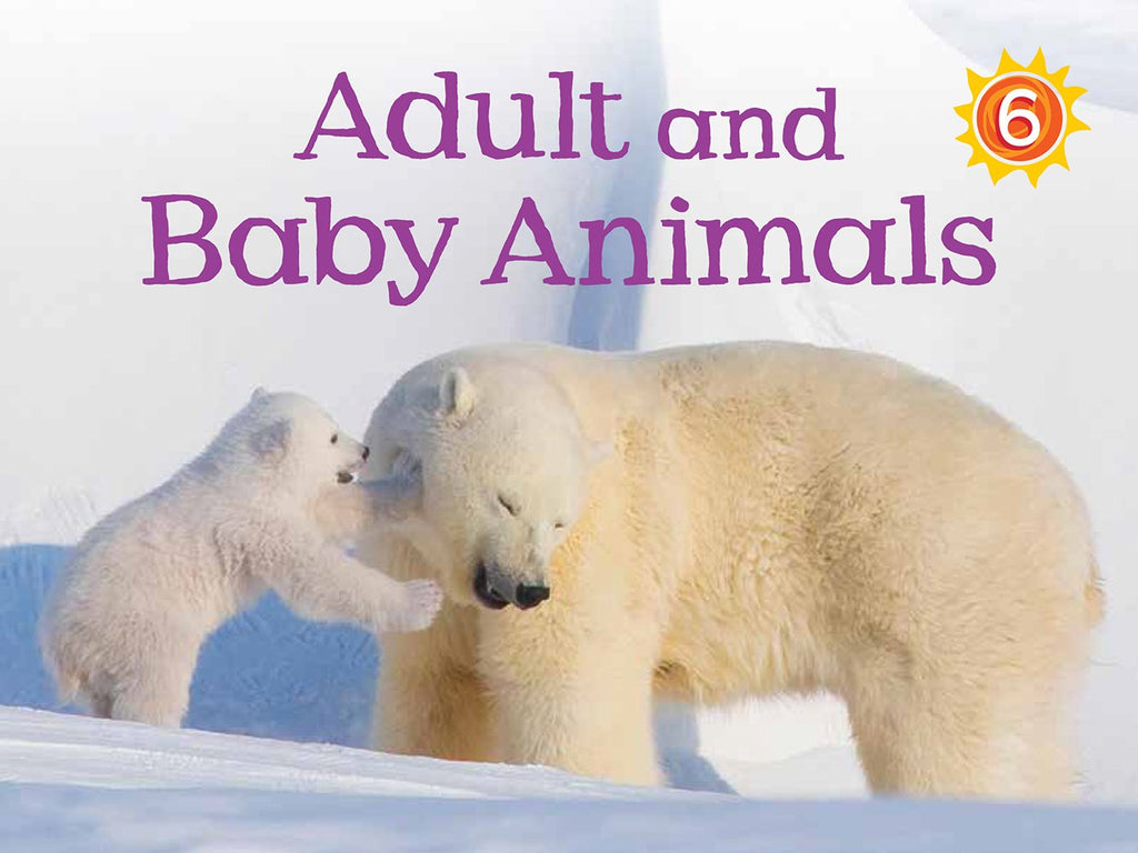 Adult and Baby Animals