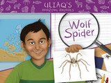 Uliaq's Amazing Animals: Wolf Spider
